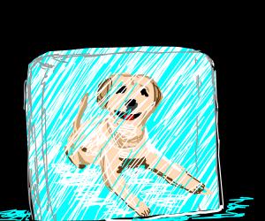 dog encased in ice