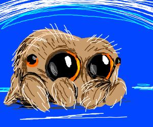 Lucas the Spider (P.I.O)