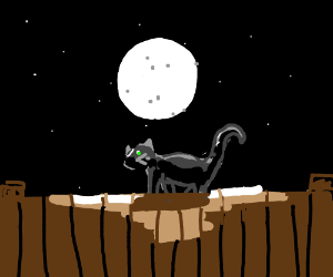 Black cat on the fence at midnight