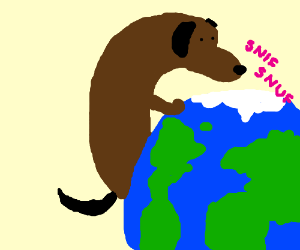 Dog sniffing the earth