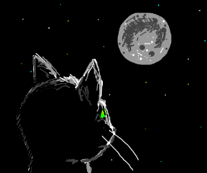 Cat watching the moon