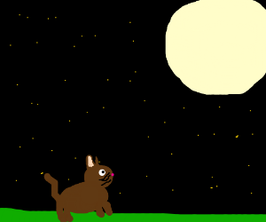 Cat stares down the moon