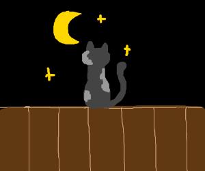 cat looks at moon