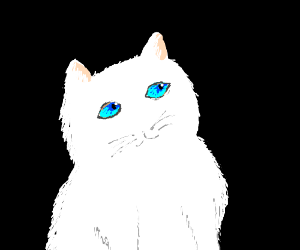 A white cat with blue eyes and no nose