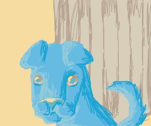 Stray Dog (Is that you Mewegu?)