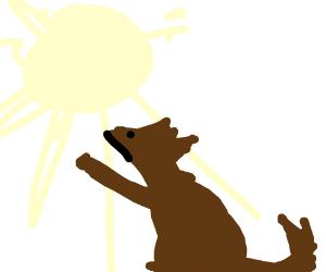 dog praises sun