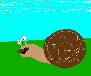 A snail with a moustache