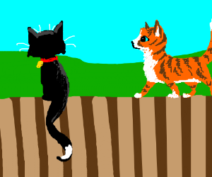 two cats on a fence