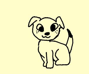 Freaking adorable dog