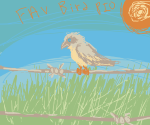 Favorite Bird PIO