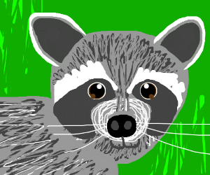 Raccoon secretly on crack but cant hide it