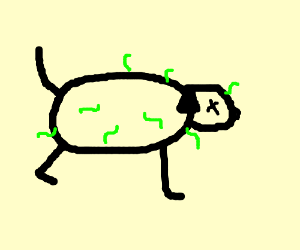 A detailed picture of worms eating a dead dog