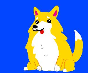Cute Doggo