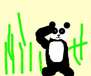 Panda on bambu forest saluting