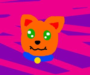 orange cat w blue collar and green eyes
