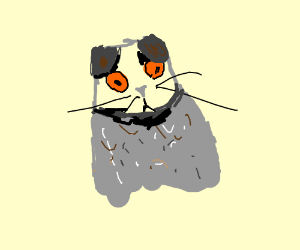 Big-eyed gray cat