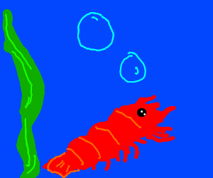a starry eyed little shrimp