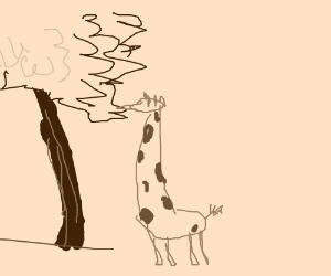 A giraffe under a tree