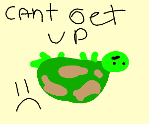 Turtle has fallen and it cant get up!