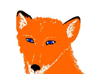 It's a Fox!