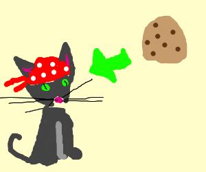 Cookie the adorable bandana cat
