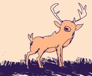 Doe (Deer)