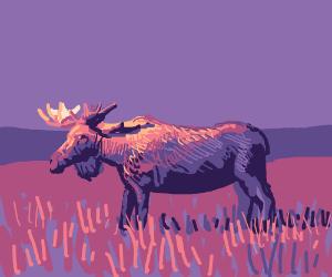Moose standing in a field.