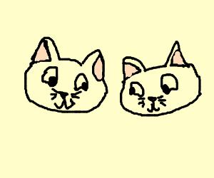 2 cute little cats
