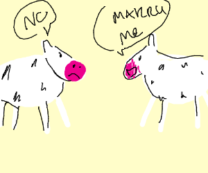 Cow denys other cows proposal