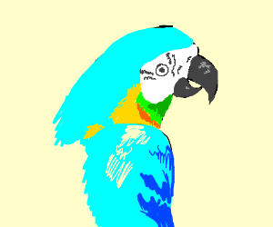 light blue parrot