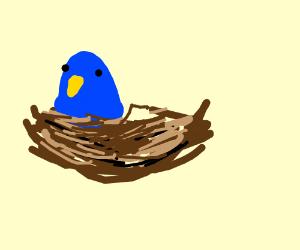 blue bird in a nest