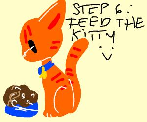 step 5: take the kitty home