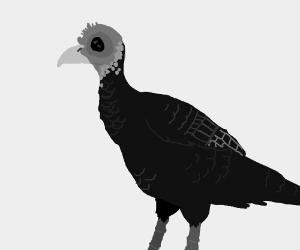 turkey boi