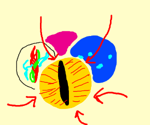 Catseye Marbel