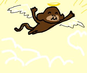 Monkey in heaven