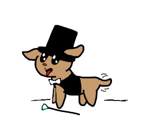 Fancy pupper