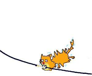 Cat biting a power line