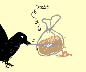 Crow opens bag of seeds with knife
