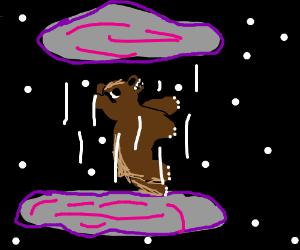 bear stuck in an infinite loop