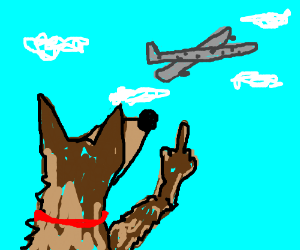 Dog flips off a plane
