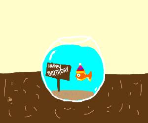 goldfish having his birthday