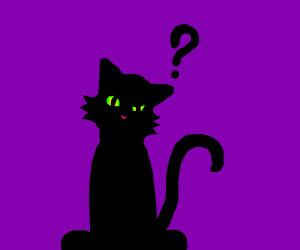 sceptical cat