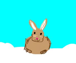 Smol bunny