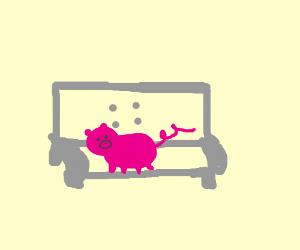 Pig on sofa