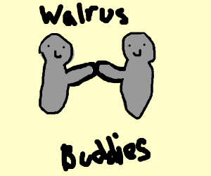 Walrus Friends