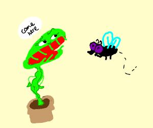 Venus flytrap luring in a fly