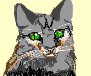 kitty cat-cute