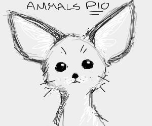 Animals PIO