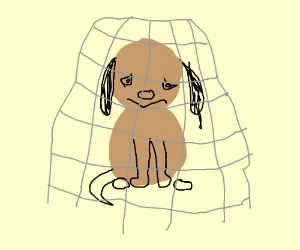 Dog Caught in a Net