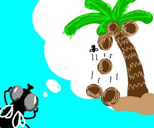 Fly plans to knock coconuts off a palm tree.